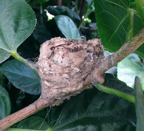 Hummingbird Nests   Hummingbird Feeders & Baths